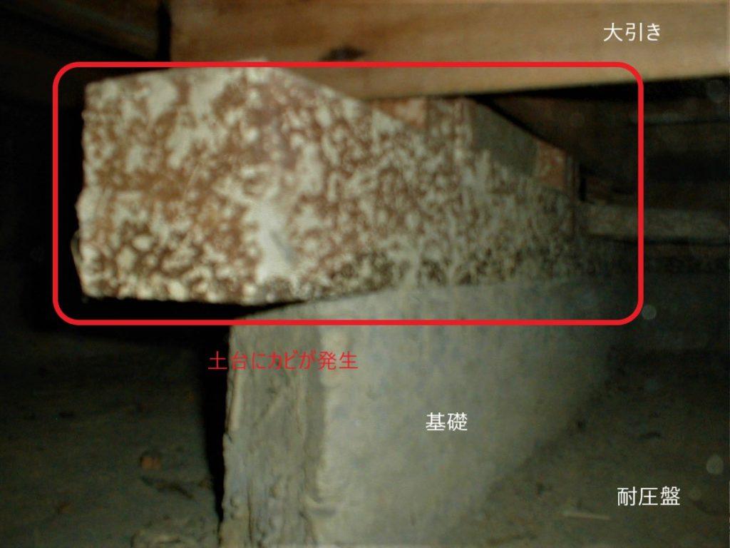 土台のカビ(塗装工房)