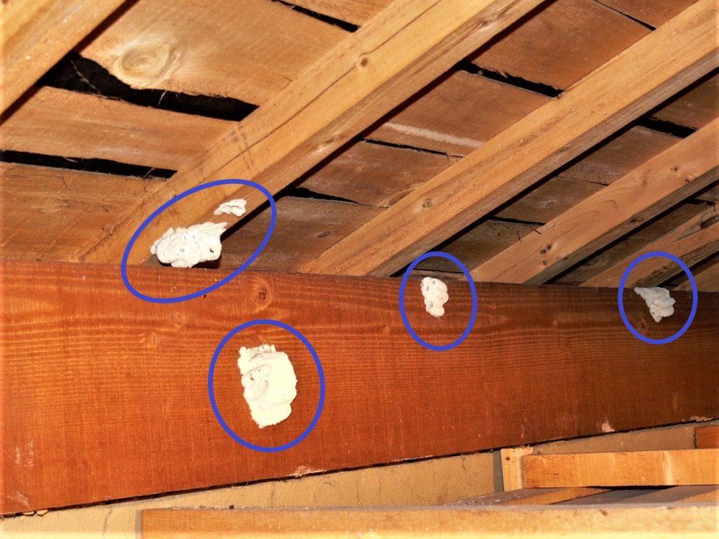 ドロバチの巣の写真(塗装工房)