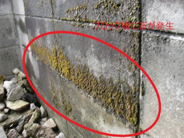 ブロック塀の苔(塗装工房)