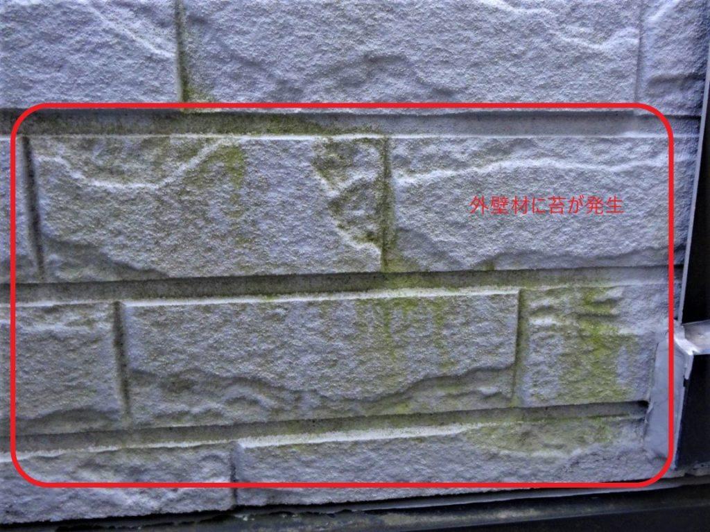 外壁の苔(塗装工房)