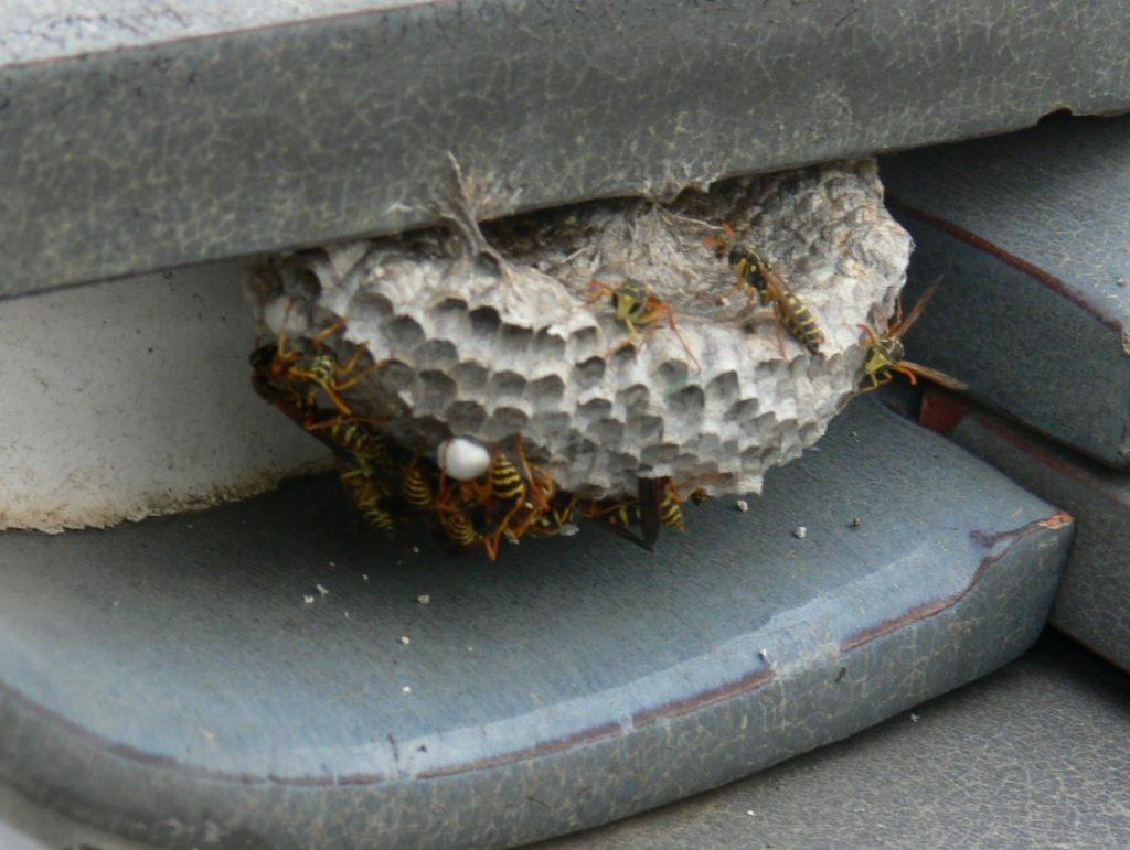 熨斗瓦の蜂の巣(塗装工房)