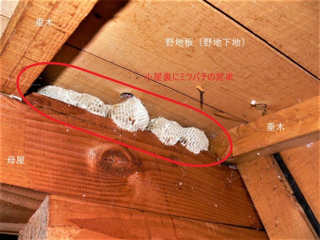 小屋裏の蜂の巣(塗装工房)