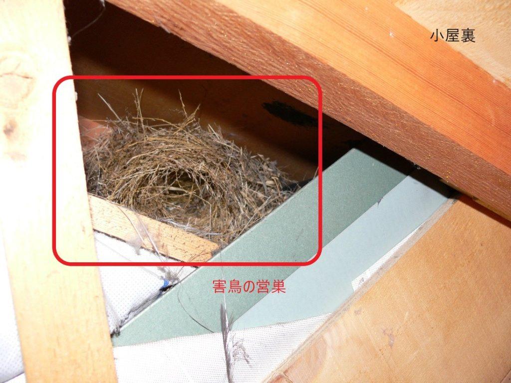 害鳥の営巣(塗装工房)