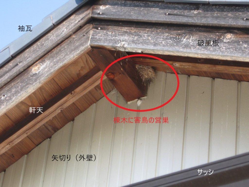 害鳥の巣(塗装工房)