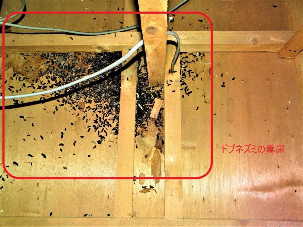 ドブネズミの糞(塗装工房)